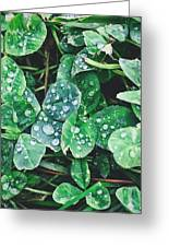 Clover Drops Greeting Card