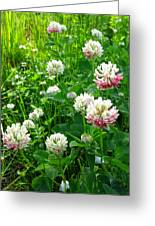 Clover Field Greeting Card