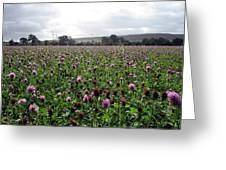 Clover Field Wiltshire England Greeting Card