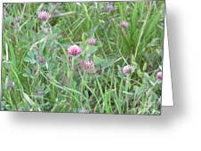 Clover In The Grass Greeting Card