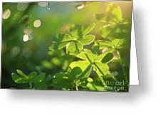 Clover Leaf In Garden, Macro Greeting Card