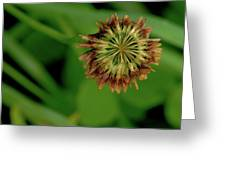 Clover Past Due Greeting Card