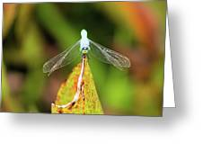 Clown Face Dragonfly Greeting Card