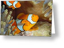 Clownfish Greeting Card