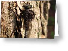 Club Tailed Robber Fly Greeting Card