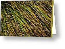 Clump Of Grass Texture Greeting Card