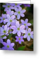 Clump Of Springtime Greeting Card