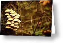 Cluster O Shrooms Greeting Card