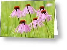 Cluster Of Cone Flowers Greeting Card