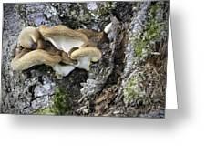 Cluster Of Fungi Greeting Card
