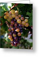 Cluster Of Ripe Grapes Greeting Card