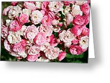 Cluster Of Roses  Greeting Card