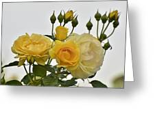 Cluster Of Yellow Roses Greeting Card