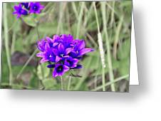 Clustered Bellflower Greeting Card