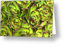 Clustered Succulents Greeting Card