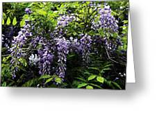 Clusters Of Wisteria Greeting Card