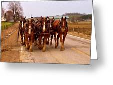 Clydesdale Amish Plow Team Greeting Card