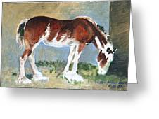Clydesdale Colt Pad Greeting Card