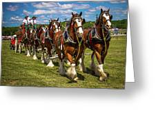 Budweiser Clydesdale Horses Greeting Card