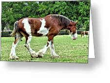 Clydesdale Greeting Card
