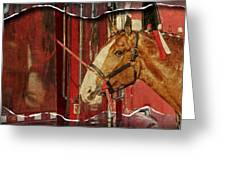 Clydesdale Ripped Greeting Card