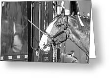 Clydesdale Shine Greeting Card