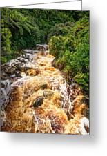 Coal Creek Rapids Greeting Card