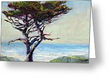 Coast Cypress Greeting Card