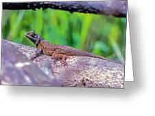 Coast Range Fence Lizard Greeting Card