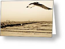 Coastal Bird In Flight Greeting Card