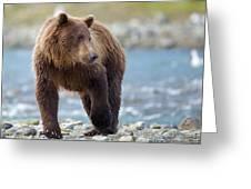 Coastal Brown Bear Greeting Card