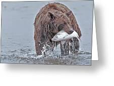 Coastal Brown Bear With Salmon  Greeting Card