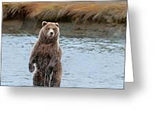 Coastal Brown Bears On Salmon Watch Greeting Card