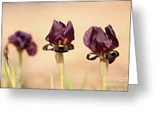 Coastal Iris  Greeting Card