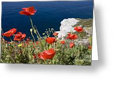Coastal Poppies Greeting Card by Richard Garvey-Williams