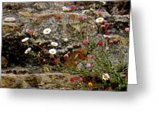 Coastal Wildflowers 1 Greeting Card