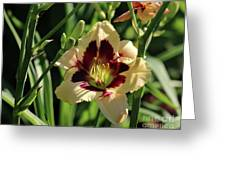 coat and tie Daylily Greeting Card