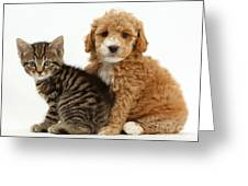 Cockapoo Puppy And Tabby Kitten Greeting Card