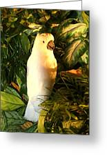 Cockatoo In Sunlight Greeting Card