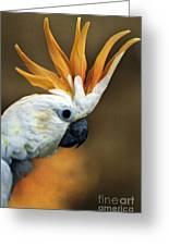 Cockatoo Show Off Greeting Card
