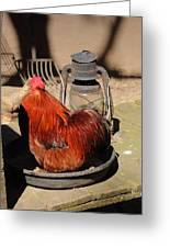 Cockerel And Storm Lamp Greeting Card
