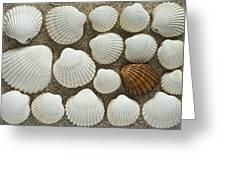 Cockles Collection Greeting Card