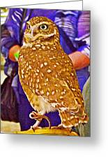 Coco The Burrowing Owl In Living Desert Zoo And Gardens In Palm Desert-california Greeting Card