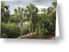 Cocohatchee River  Greeting Card