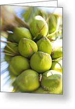 Coconut Bunch Greeting Card