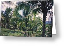 Coconut Farm Greeting Card
