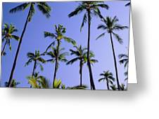 Coconut Grove At Wailua Greeting Card