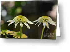 Coconut Lime Echinacea Greeting Card