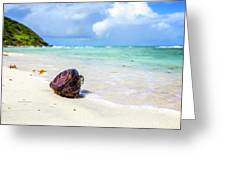 Coconut On The Beach Greeting Card