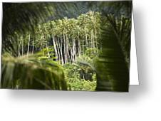 Coconut Palm Trees Greeting Card